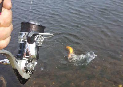 buderupholm-eroeffnung-07-fish-on-gold